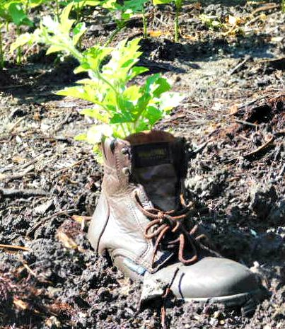 Boot with plant