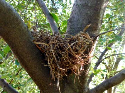 empty nest in apple tree