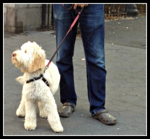 Dog on a leash in New York