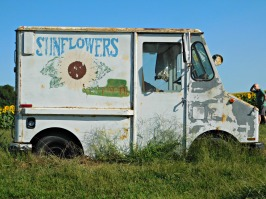 sunflower-truck