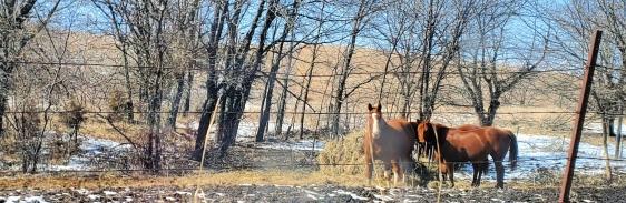 VS Horses